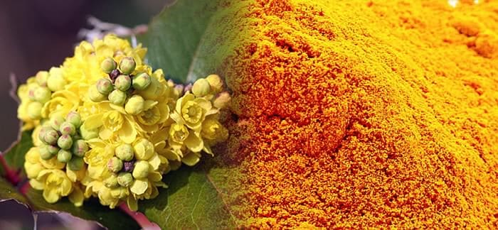 Berberine-extrait-de-fleur