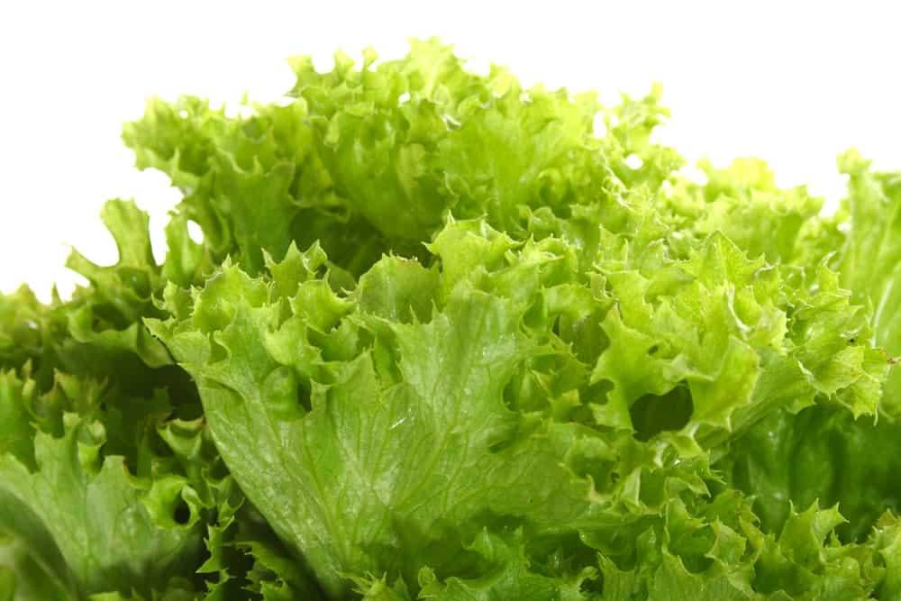 Chlorophylle contre les jambes sans repos