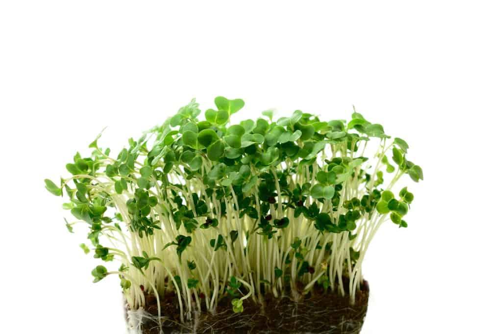 Jus de cresson-plantes