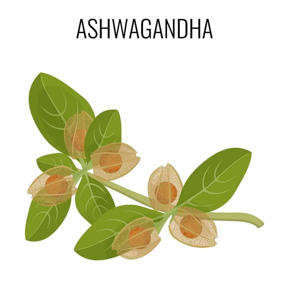 Ashwagandha feuilles-bienfaits