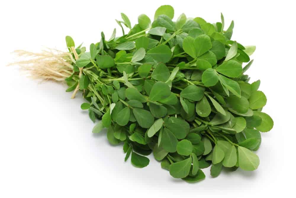 10 bienfaits du fenugrec-feuilles
