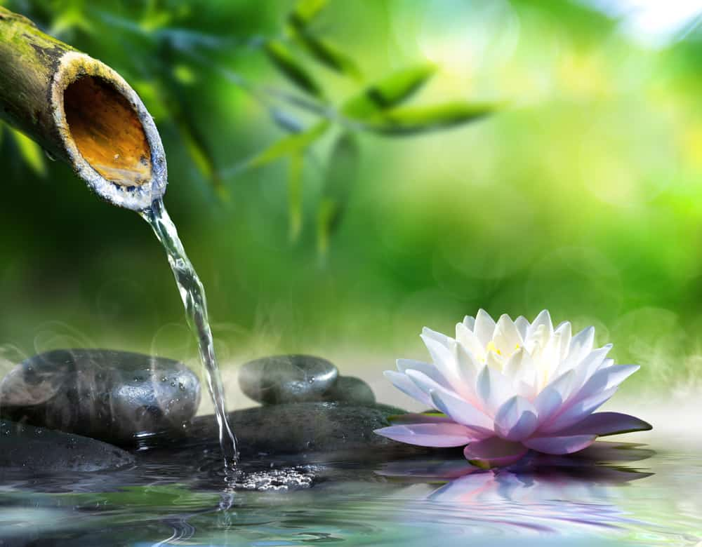 Fleur De Lotus la fleur de lotus : tout savoir sur son histoire et sa signification