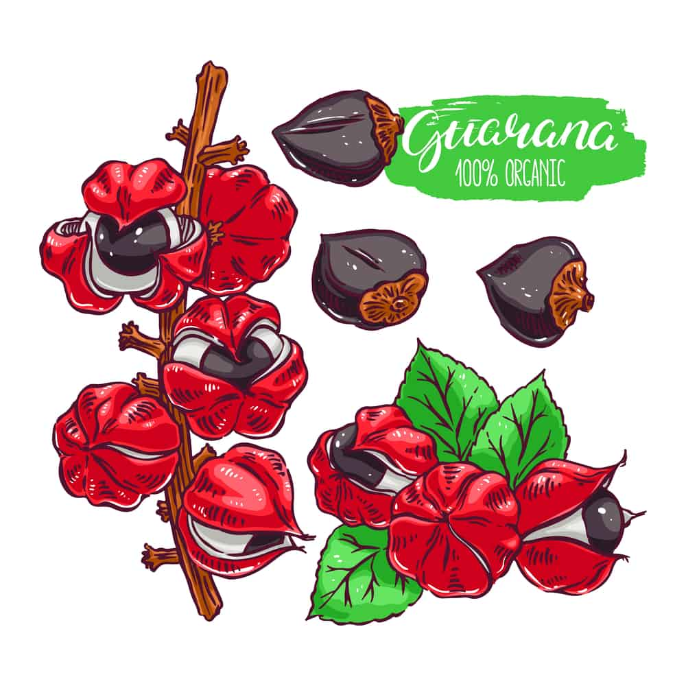 guarana-bienfaits